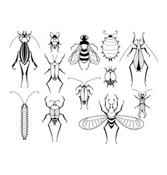 Different insects with patterns on wings vector