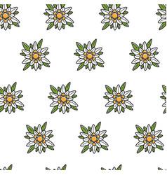 edelweiss wild flower austrian symbol seamless vector image