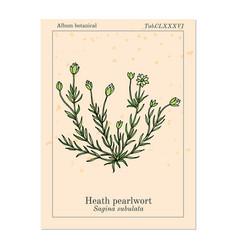 Heath pearlwort sagina subulata vector