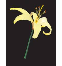 yellow lily vector image