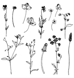 Set of ink drawing herbs and leaves vector image