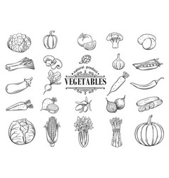 Hand drawn vegetables icons set decorative vector
