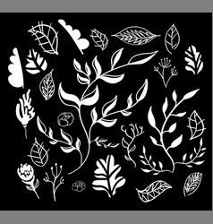 hand drawn floral elemets vector image