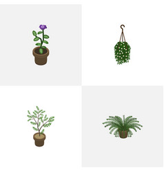 Isometric houseplant set of blossom plant flower vector