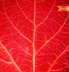 Red Leaf Texture vector image