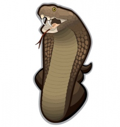 cobra snake ready to strike vector image vector image