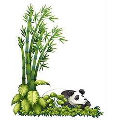 A sleeping panda vector