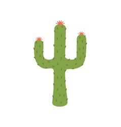 cactus plant image closeup vector image