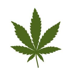 cannabis leaf marijuana isolated over white vector image