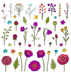floral hand drawn elements vector image