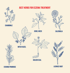 best medicinal herbs for eczema vector image