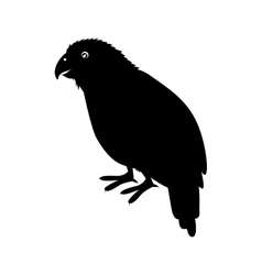 Kakapo bird icon vector