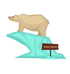 Polar bear zoo animal and wooden signboard vector