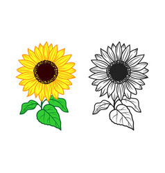 sunflower print for t-shirt color vector image