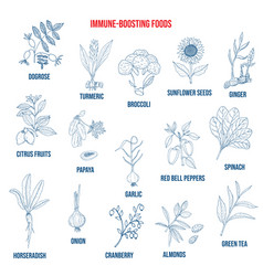 best foods for immune system vector image