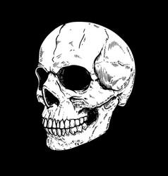 human skull on dark background design element vector image