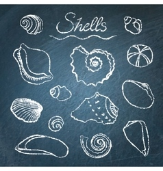 Set of shells on chalkboard vector