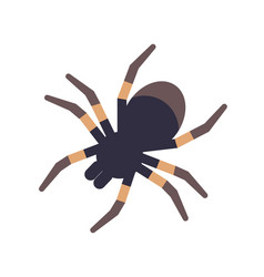 Tarantula isolated on white background vector