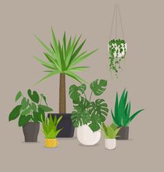 set of green indoor house plants in pots vector image vector image