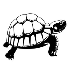 graphic black turtle on white background vector image