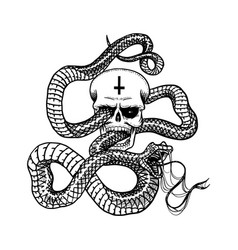 snake with a skull in vintage style serpent cobra vector image