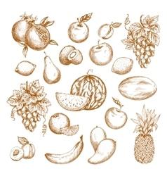 Fresh fruit sketch set for healthy food design vector image vector image