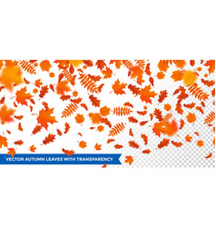 autumn falling leaves pattern transparent vector image