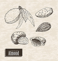 Background with almond vector