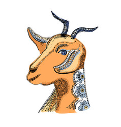 goat image of the hand-drawn vector image