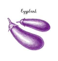 Ink sketch of eggplant vector