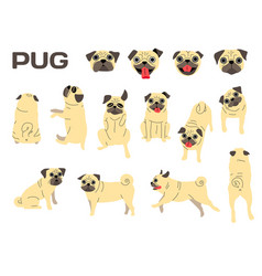 Pug in action vector
