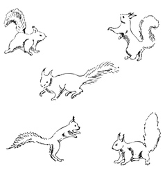 Squirrels in different positions Pencil sketch by vector