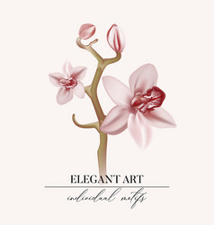 watercolor orchid branch soft rose hand drawn vector image