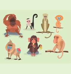 different breads monkey character animal wild zoo vector image