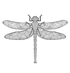 Dragonfly Animals Hand drawn doodle insect vector