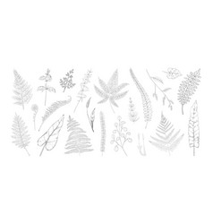 forest leaves hand drawn fern foliage grass vector image