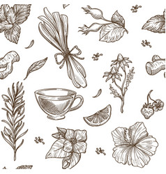 herbs sketch pattern background seamless vector image