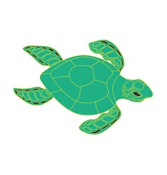 turtle on a white background vector image