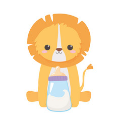 baby shower cute little lion animal with milk vector image