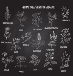 Collection of medicinal herbs for migraines relief vector