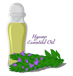 Essential oil of hyssop vector