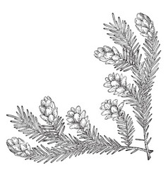 Pine cone corner lower right for decorating vector