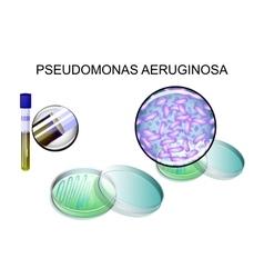 Pseudomonas aeruginosa bacterial inoculation vector