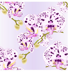 Seamless texture stem with flowers and buds vector