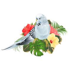 budgerigar blue pet parakeet and hibiscus vector image