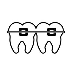 Molar teeth with braces dentistry icon image vector