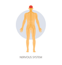 nervous system brain and nerve endings isolated vector image