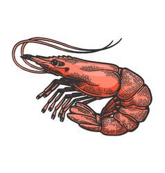 Shrimp sea animal sketch color engraving vector
