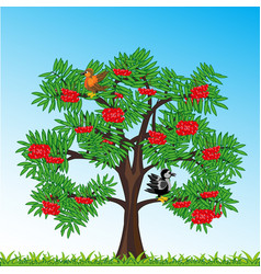 tree rowanberry with berry year daytime vector image