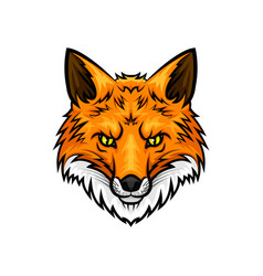 fox head muzzle or snout mascot icon vector image vector image